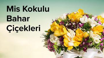 Yeni iş ve Mevsim Çiçekleri